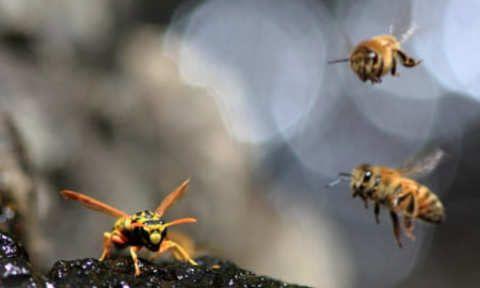 Бджоли в очах? Уникнення очних пошкоджень від бруду, сміття та комах photo